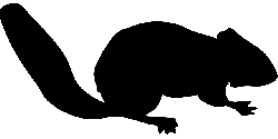 park, black, small, silhouette, chipmunk, forest, tail