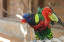 parrot, animal, red, bird, birds, feather, blue, yellow