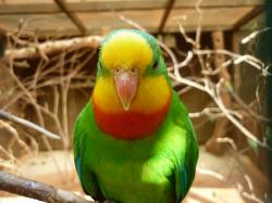 parrot, bird, animal, captivity, animals, birds