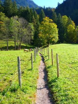 path, trail, meadow, run
