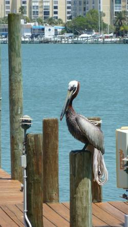 pelican, perched, dock, water, harbour, lagoon, bay