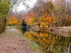 pennsylvania, canal, water, forest, trees, woods, fall