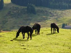 pets, horse, horses, animal, ride, nature, meadow