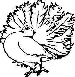 pigeon, fluffed up, feathers, animal, biology, bird