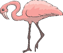 pink, bird, flamingo, long, neck, animal, beak, curious