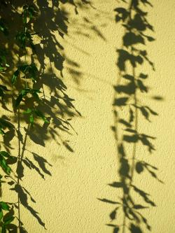 plant, pendant, shadow, projection, ornamental, wall