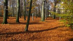 poland, forest, trees, leaves, fallen leaves, autumn
