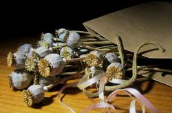poppy, seed pods, dry, bleached, packet, paper, ribbon
