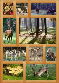 poster, autumn, frame, decoration, colorful, october