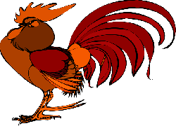 poultry, angry, feather, defiant, red, comb, cockscomb