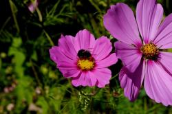 purple, flower, plant, bee