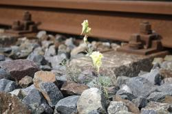 railroad track, railway embankment, flower, plant