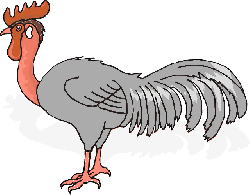 red, green, farm, bird, rooster, animal, feathers, and