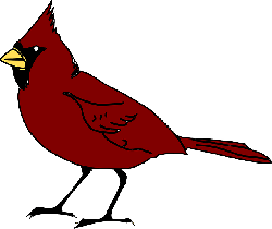 red, yellow, birds, bird, beak, cardinal, wings, tail