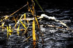 reed, ice, pond, frozen, winter, teichplanze, frost