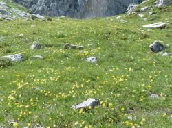 reported, alpine meadow, flower meadow, alpine, allgäu