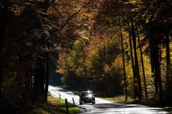 road, auto, forest, autumn, fall foliage, golden autumn