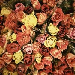 roses, d, flowers, valentine's day, thank you, love