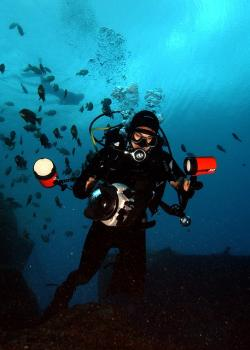 sea, ocean, water, diver, diving, swimming, underwater