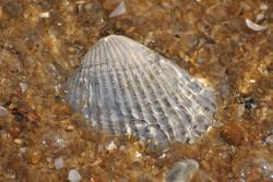 sea, shell, shells, seashell, pattern, background