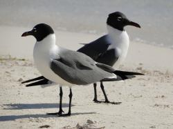 seagull, couple, contrary, discussion, disagreement