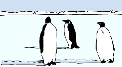 shadow, landscape, bird, ice, snow, penguins, penguin