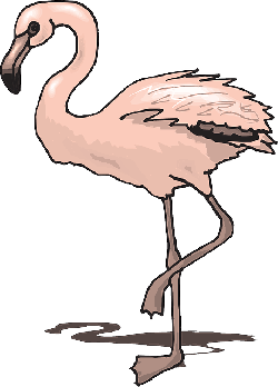 shadow, pink, bird, wings, flamingo, standing, animal