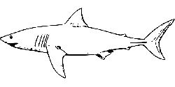 shark, fish, water, black, simple, outline, drawing