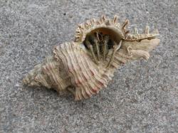 shell, cancer, hermit crab