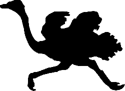 silhouette, bird, running, ostrich, wind, animal, fast