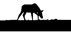 silhouette, from, horse, ground, eating