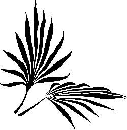 silhouette, plants, leaf, palm, tree, branches, flower