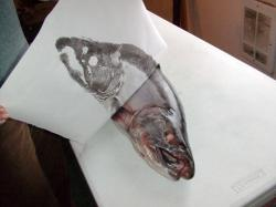 silver, salmon, fish, print, art