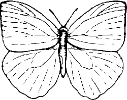 sketch, cartoon, butterfly, bug, insect, animal