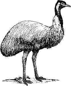 sketch, cartoon, page, bird, colour, ostrich, animal