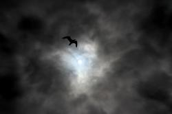 sky, cloud, clouds, calm, tranquility, bird, sun