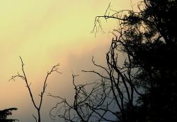 sky, sunset, pink, yellow, grey, glow, trees, twigs