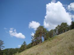 slope, from the bottom, pine, sky, clouds, summer