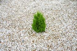 small, green, tree, white