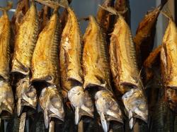 smoked fish, smoked trout, fish, trout, food, oven