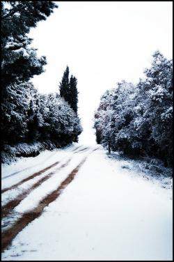 snow, nevada, snowy road, trees, winter, landscape