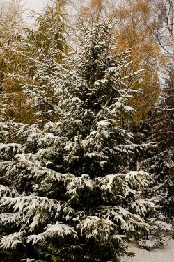 snow, tree, christmas, branches, branch, season, cold