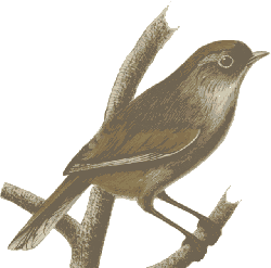 sparrow, bird, feathers, animal, brown, sitting, twig