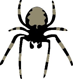 spider, insect, arachnoid, animal, nature, fear, horror