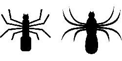 spider, insect, crawl, spooky, arachnoid, creepy