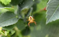 spider, web, spiderwebs, animals, spiders, bush, green