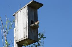 spring, nature, birdhouse, sparrow, bird, against sky