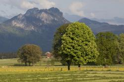 spring, sunshine, may, mountains, trees, nature