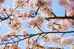 spring, tree, branch, branches, seasons, sun, flower