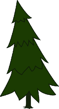 spruce, fir tree, evergreen, conifer, tree, forest